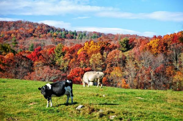 Photograph - Autumn Pastures by Lynn Bauer