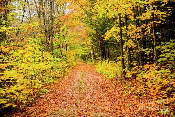 Photograph - Autumn Path by Alana Ranney