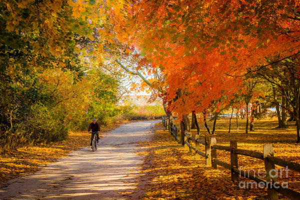 Photograph - Autumn Path by Alissa Beth Photography