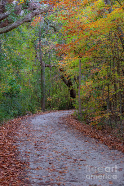 Photograph - Autumn Path by Dale Powell