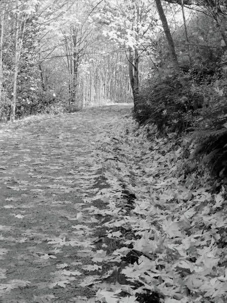 Photograph - Autumn Path by Jenny Mead