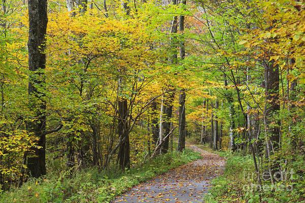 Photograph - Autumn Path by Jill Lang