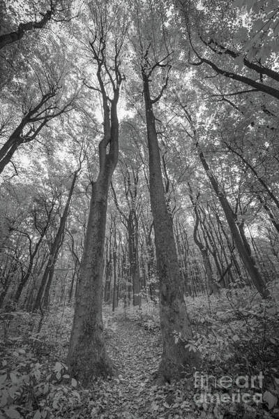 Shenandoah Wall Art - Photograph - Autumn Path  by Michael Ver Sprill