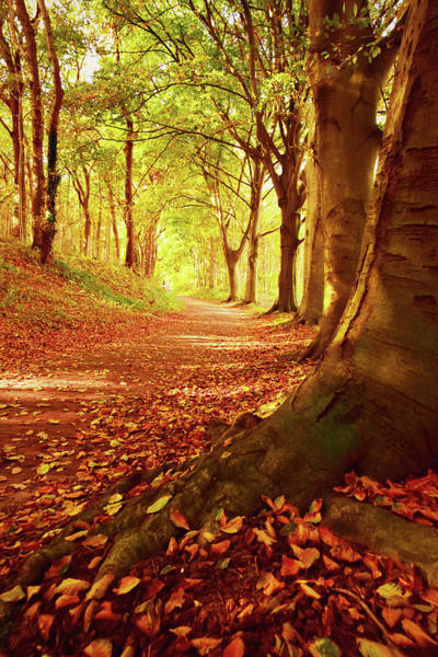 Mural Photograph - Autumn Path by Mihaela Pater