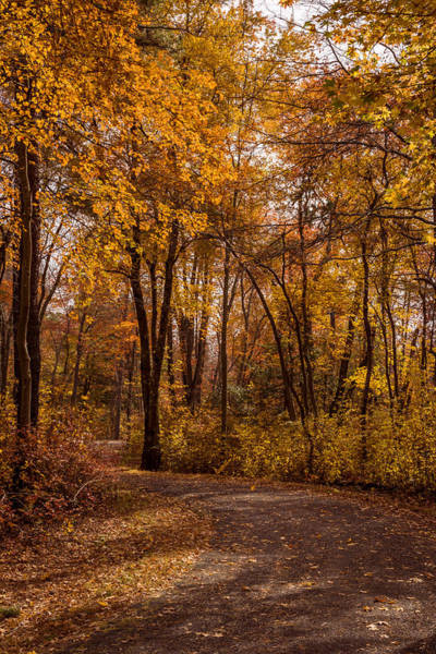 Photograph - Autumn Golden Path New Jersey by Terry DeLuco