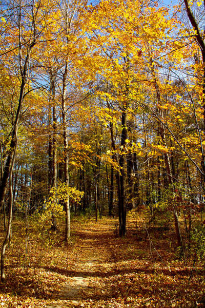 Photograph - Autumn Path by Phil Koch