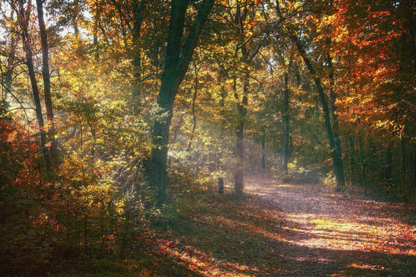 Sunbeam Photograph - Autumn Path by Scott Norris