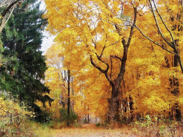 Photograph - Autumn Path by Susan Savad