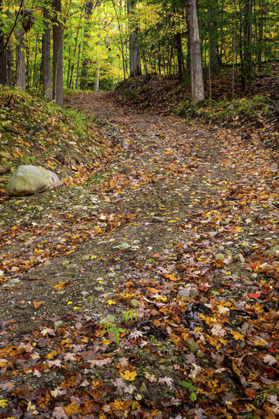Photograph - Autumn Pathway by Dale Kincaid