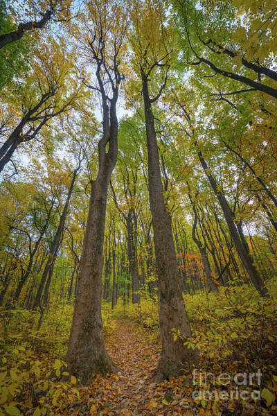 Shenandoah Wall Art - Photograph - Autumn Pathway  by Michael Ver Sprill