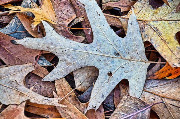 Wall Art - Photograph - Autumn Patterns by Linda Brown