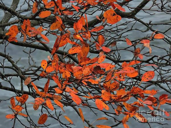 Photograph - Autumn Peach by Marcia Lee Jones