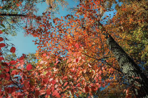 Lost River State Park Wall Art - Photograph - Autumn Perspective 1 by James Barber
