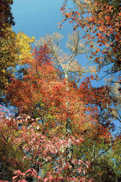 Lost River State Park Wall Art - Photograph - Autumn Perspective 3 by James Barber