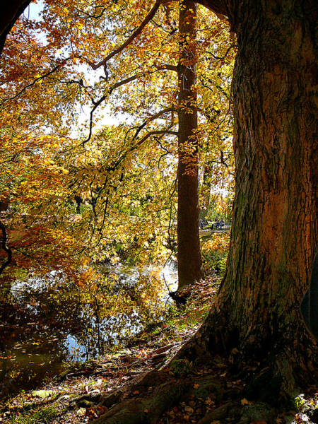 Photograph - Autumn Perspective by Susan Savad