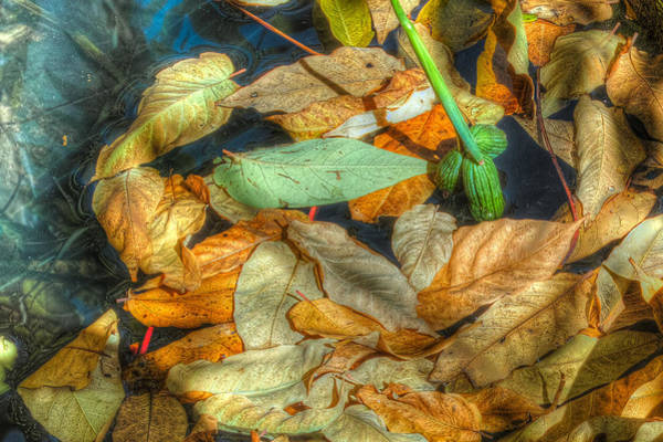 Photograph - Autumn by Peter Dyke