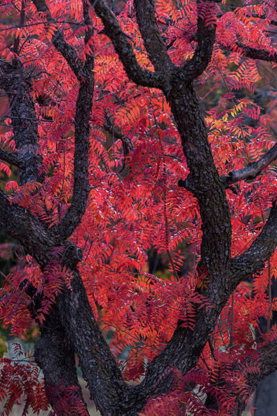 Photograph - Autumn by Peter Tellone