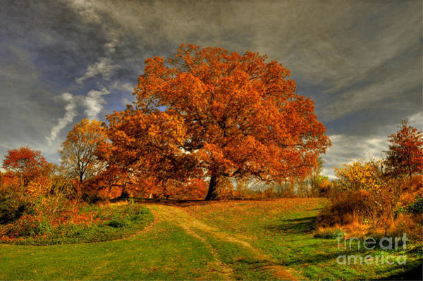 Photograph - Autumn Picnic On The Hill by Lois Bryan