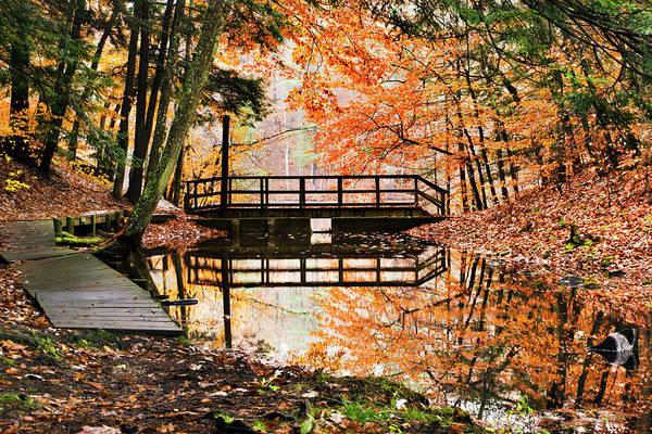 Photograph - Autumn Pleasure by Christina Rollo