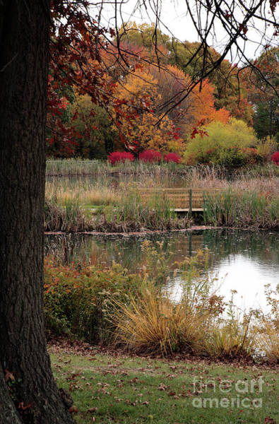 Photograph - Autumn Pond In Maryland by William Kuta
