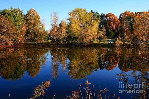 Photograph - Autumn Pond Scene 2 by Angela Rath