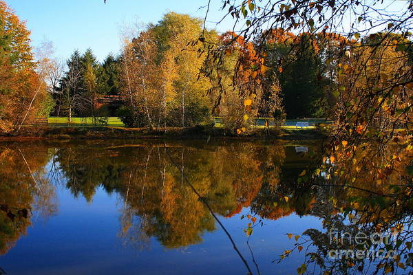 Photograph - Autumn Pond Scene 3 by Angela Rath