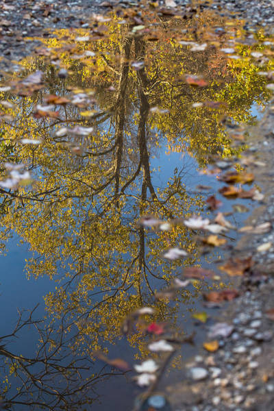 Photograph - Autumn Puddle by Sara Hudock