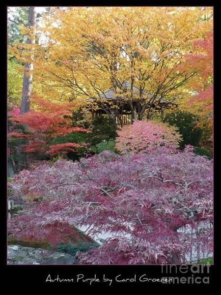 Photograph - Autumn Purple by Carol Groenen