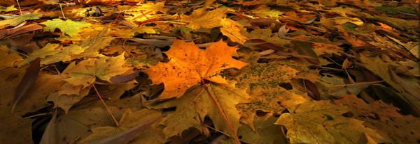 Photograph - Autumn Quilt by David Andersen