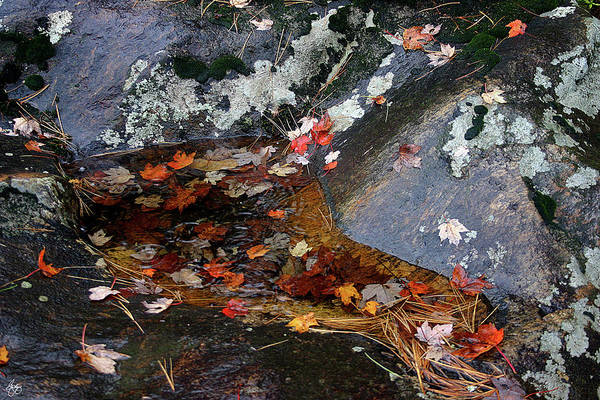 Photograph - Autumn Rain No 1 by Wayne King