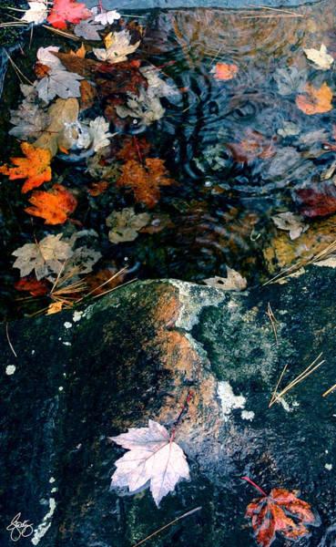 Photograph - Autumn Rain No 2 by Wayne King