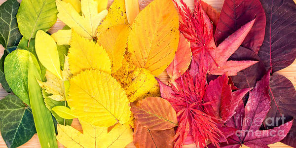 Wall Art - Photograph - Autumn Rainbow by Delphimages Photo Creations