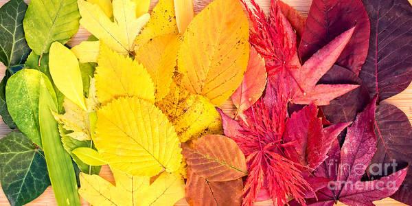 Autumn Leaves Photograph - Autumn Rainbow by Delphimages Photo Creations