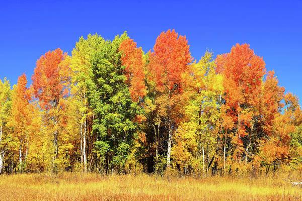 Photograph - Autumn Rainbow by Greg Norrell