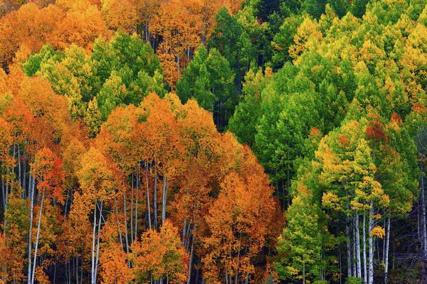 Photograph - Autumn Rainbow by John De Bord