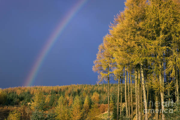 Galloway Wall Art - Photograph - Autumn Rainbow by Rod McLean
