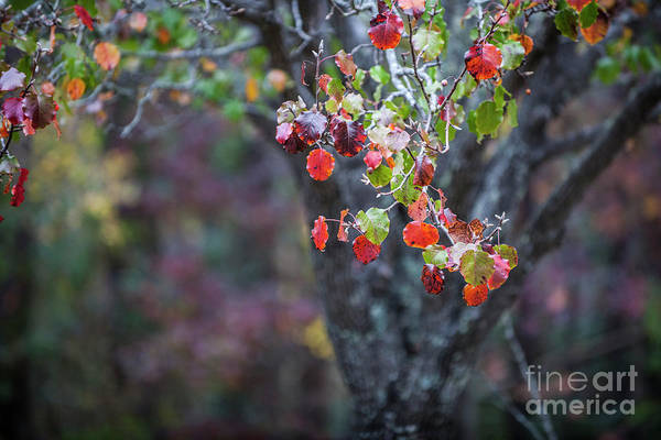 Photograph - Autumn Red by Dale Powell