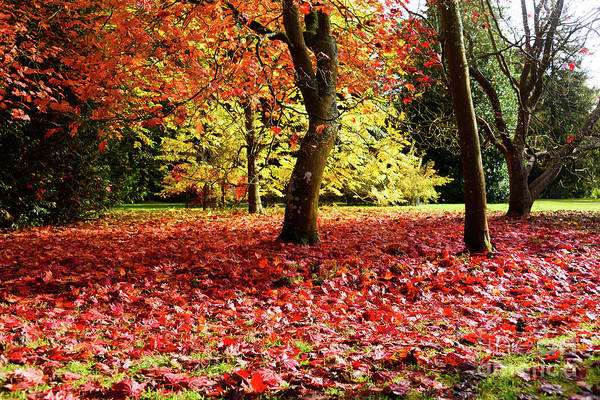Photograph - Autumn Reds by Colin Rayner