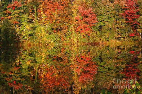 Autumn Reflections In A Pond Art Print