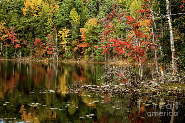 Photograph - Autumn Reflections by Karin Pinkham