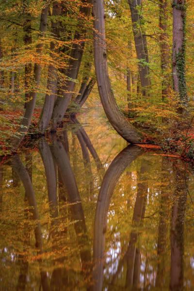 Photograph - Autumn Reflections by Mario Visser