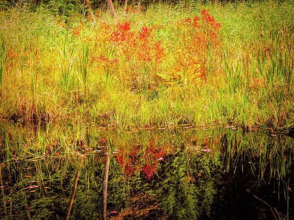 Digital Art - Autumn Reflections by Rusty R Smith
