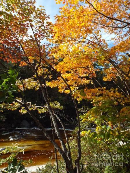 Photograph - Autumn River by Barbara Von Pagel