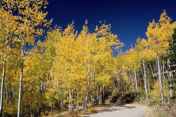 Photograph - Autumn Road by Jim West