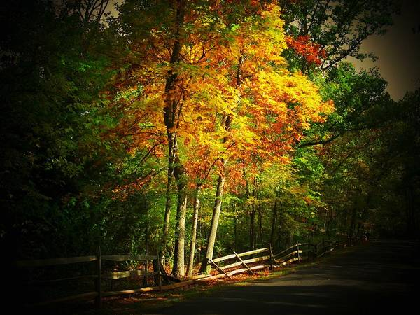 Wall Art - Photograph - Autumn Road by Joyce Kimble Smith