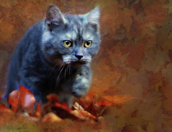 Photograph - Autumn Romp Cat Art by Isabella Howard