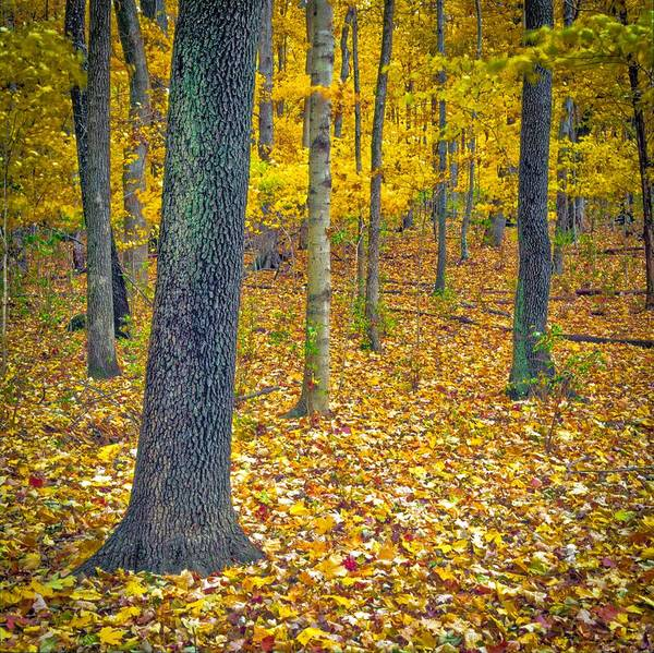 Photograph - Autumn by Samuel M Purvis III