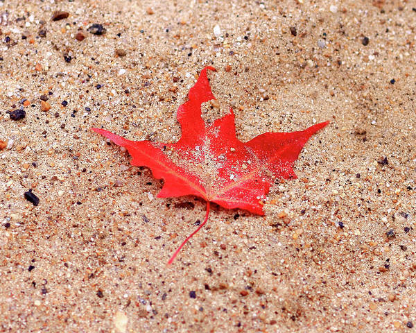 Photograph - Autumn Sand by Brian Pflanz