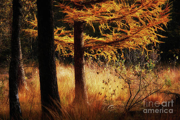Photograph - Autumn Scene In A Dark Forest by Nick Biemans