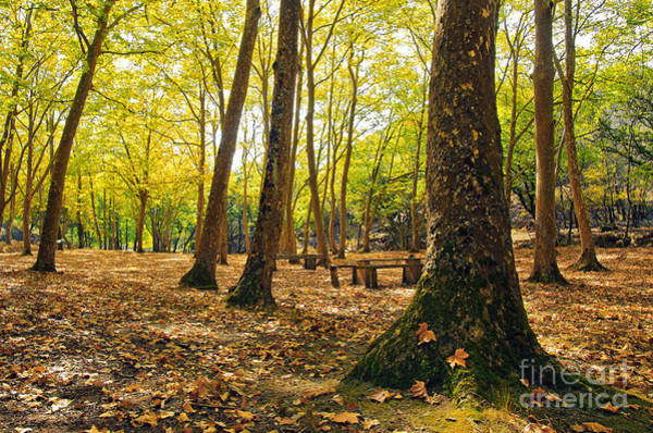 Picnic Tables Photograph - Autumn Scenery by Carlos Caetano
